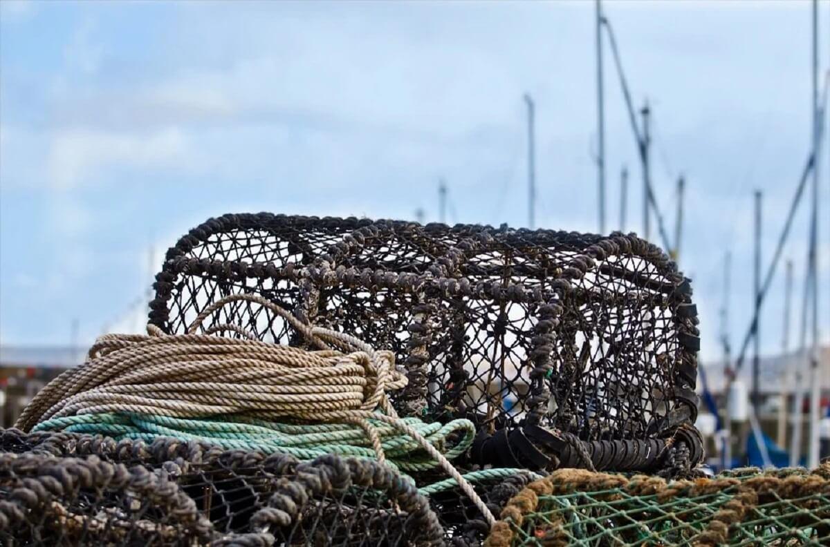 Californische wet moet zeedieren beschermen tegen touwen krabvissers
