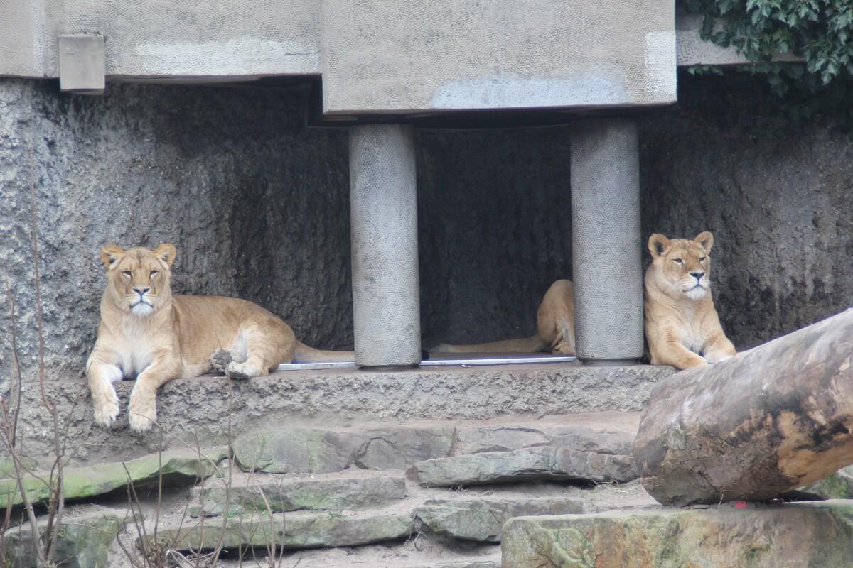 Koppel voorwaarden dierenwelzijn aan staatssteun dierentuinen