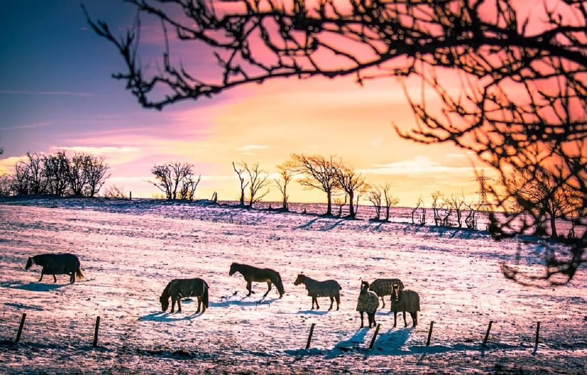 help dieren de winter door
