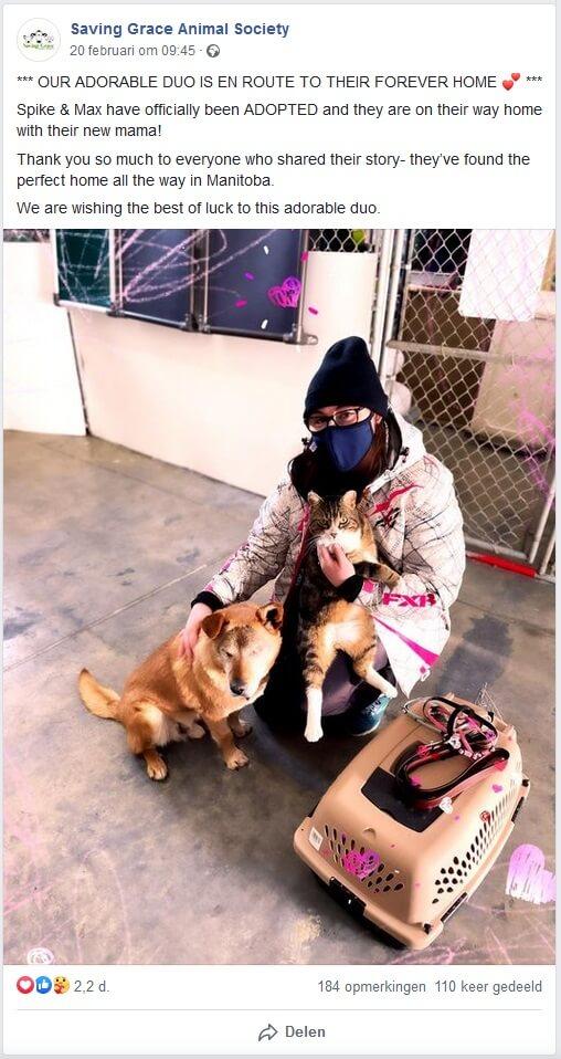 Blinde hond en zijn blindengeleidekat geadopteerd