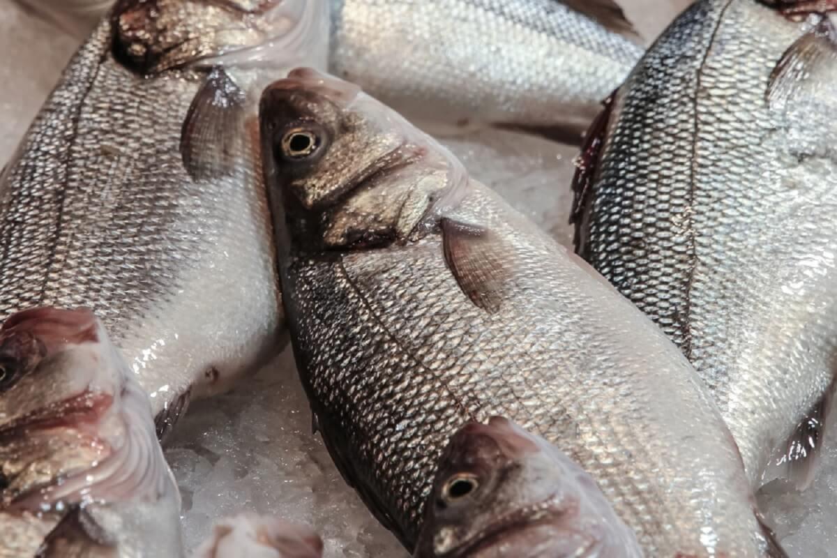 Werelddag voor het Einde van de Visserij