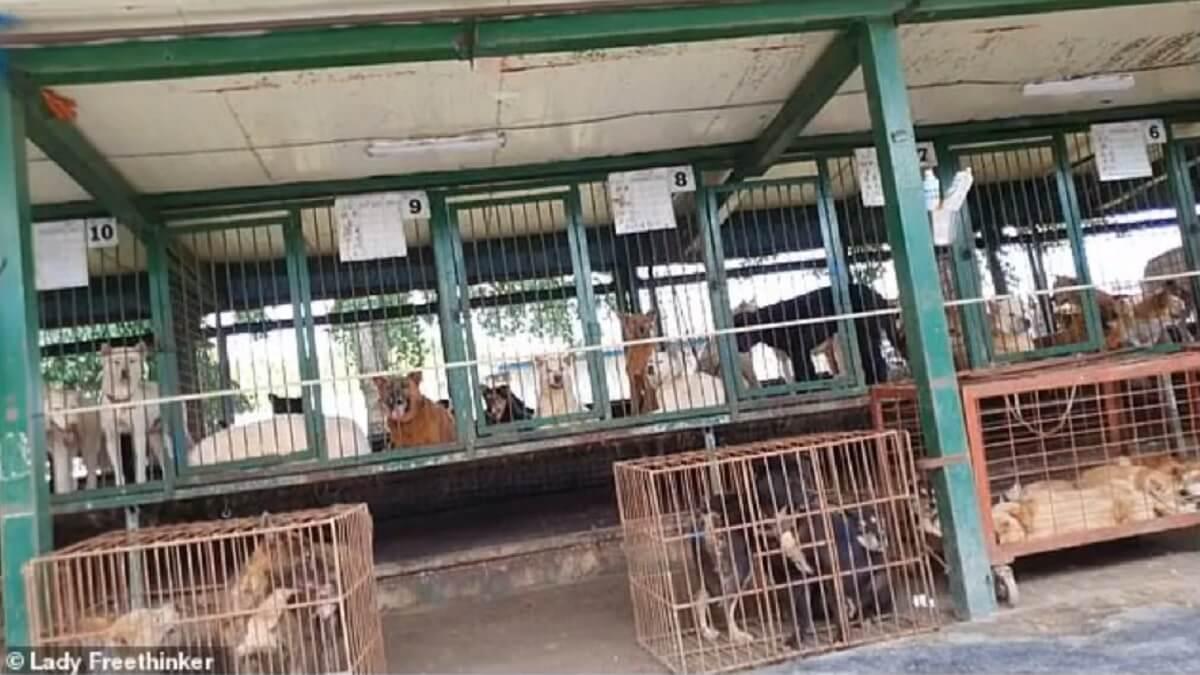 Hondenvleesveilinghuis Nakwon Auction House