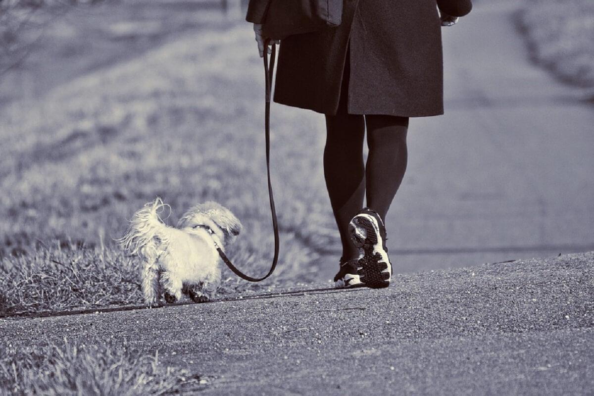 Meer honden gestolen in VS en VK door pandemie