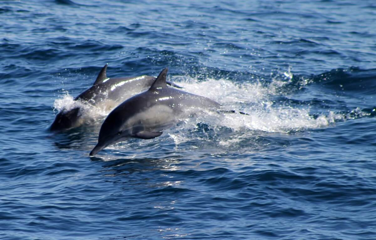 vrije dolfijnen