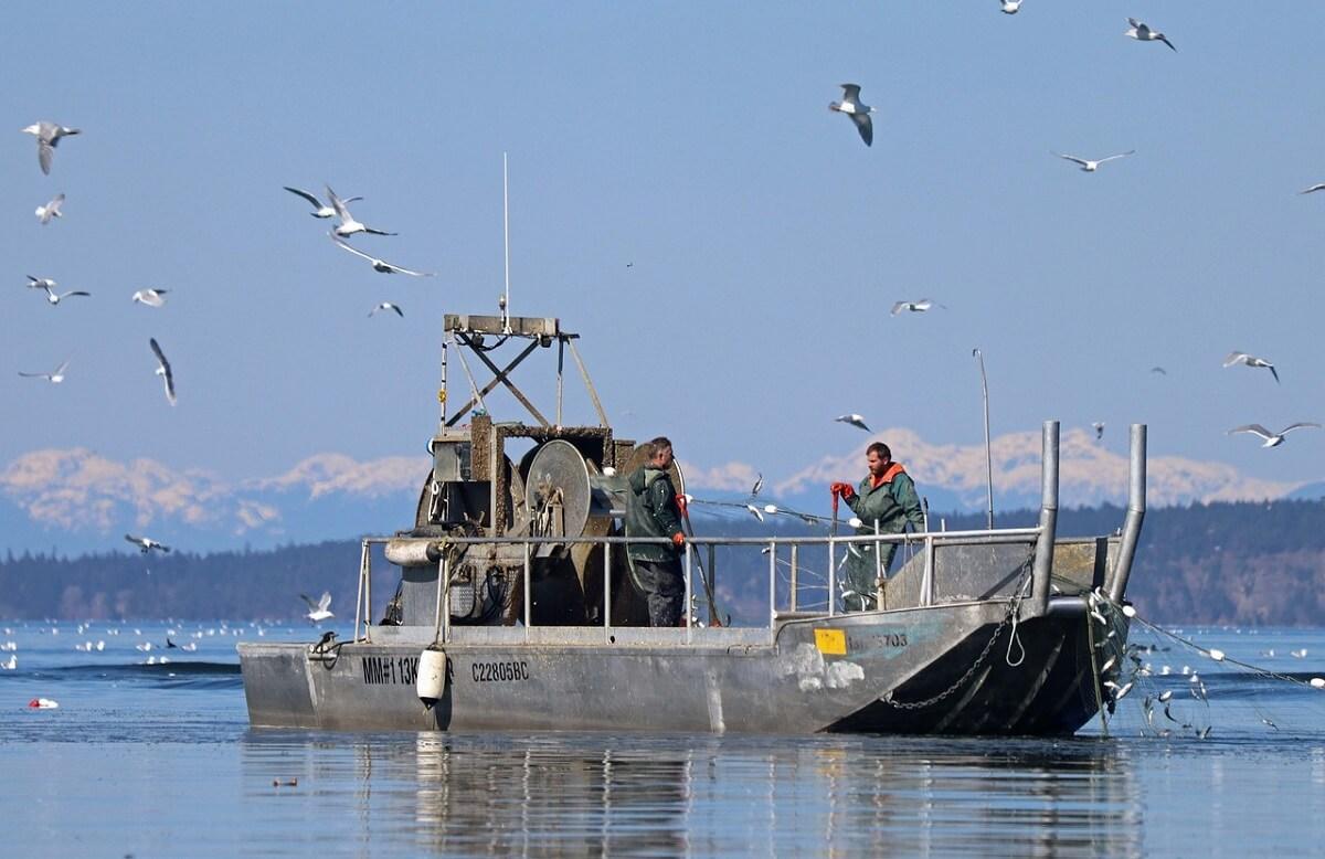 commercicële visserij