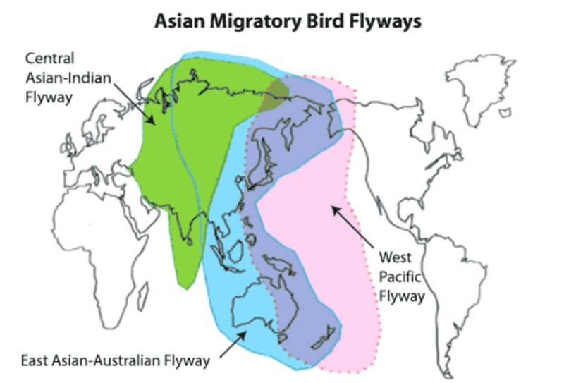 Jacht en ontbossing bedreigen trekvogels in Azië
