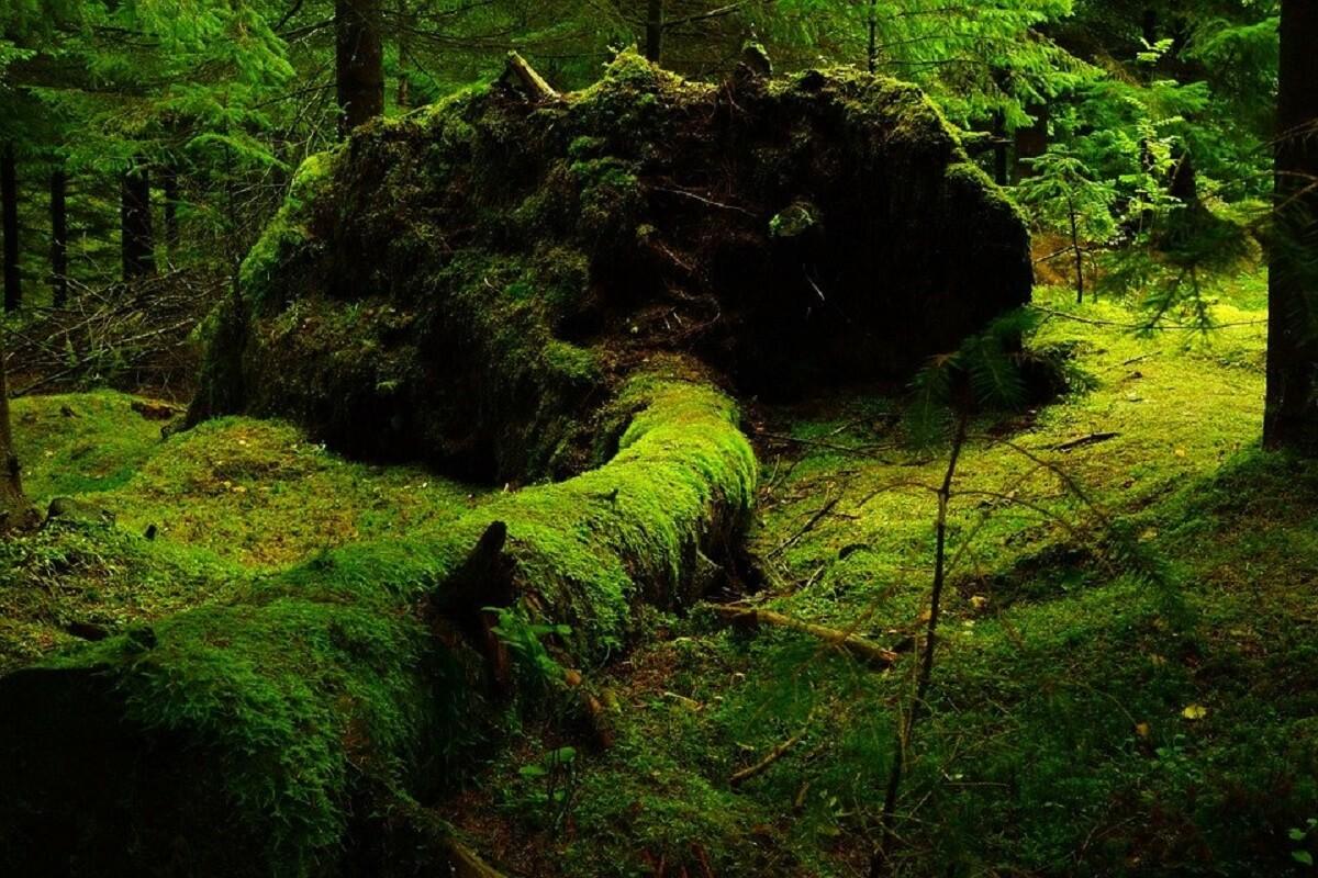 Slechts drie procent van oorspronkelijke natuur nog intact