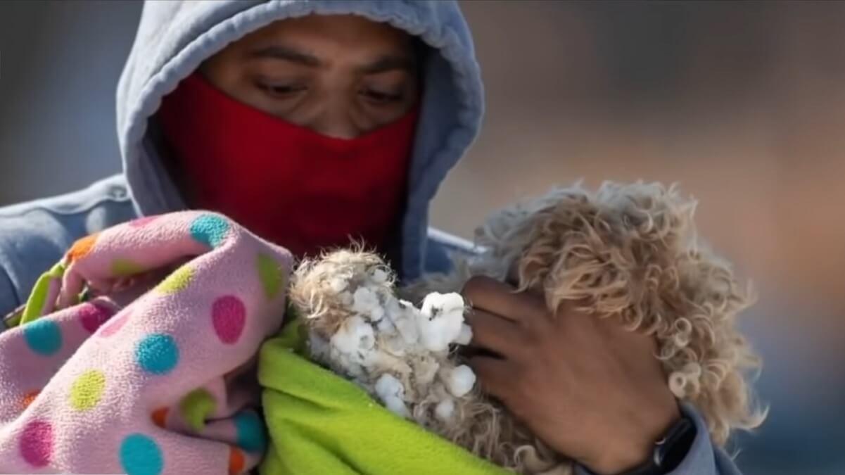 hond gered van ijsschots