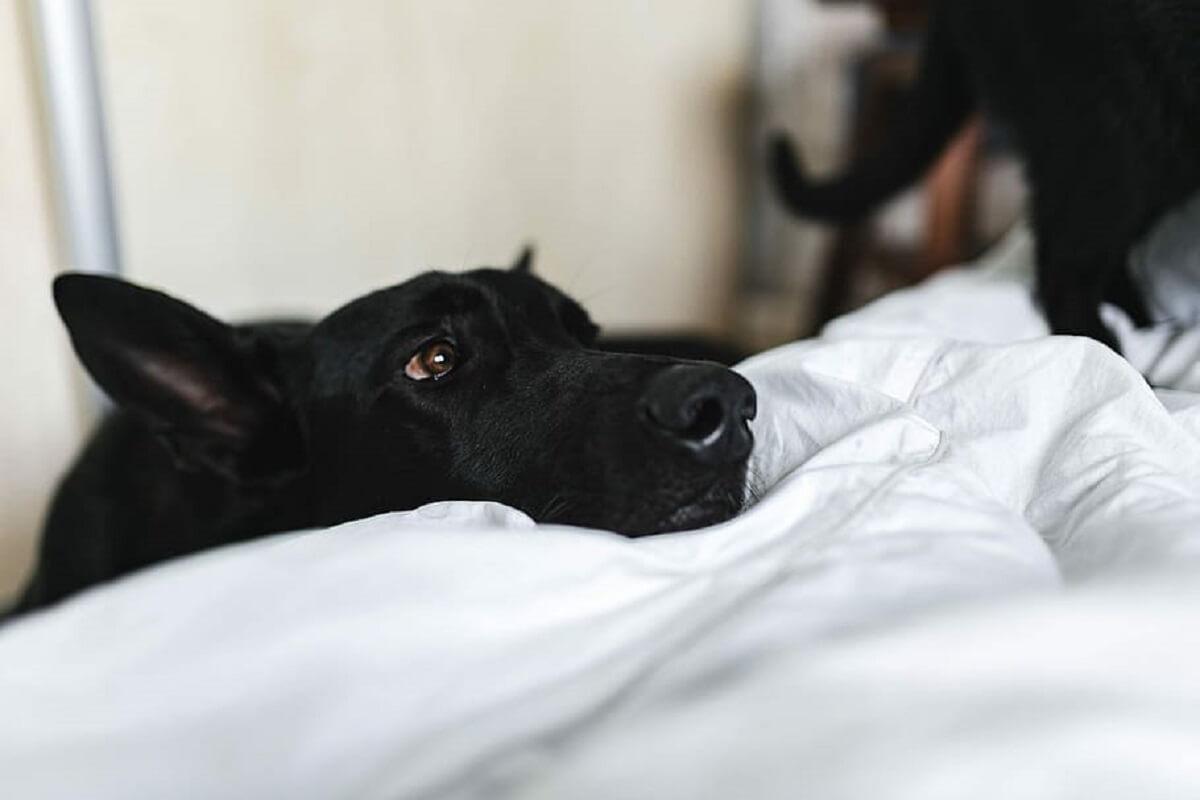 Honden moeten voorbereid worden op situatie na lockdown