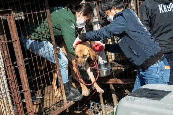 50 honden gered van euthanasie op hondenvleesfokkerij in Zuid-Korea