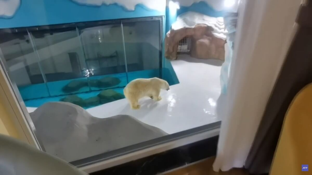 ijsberenhotel