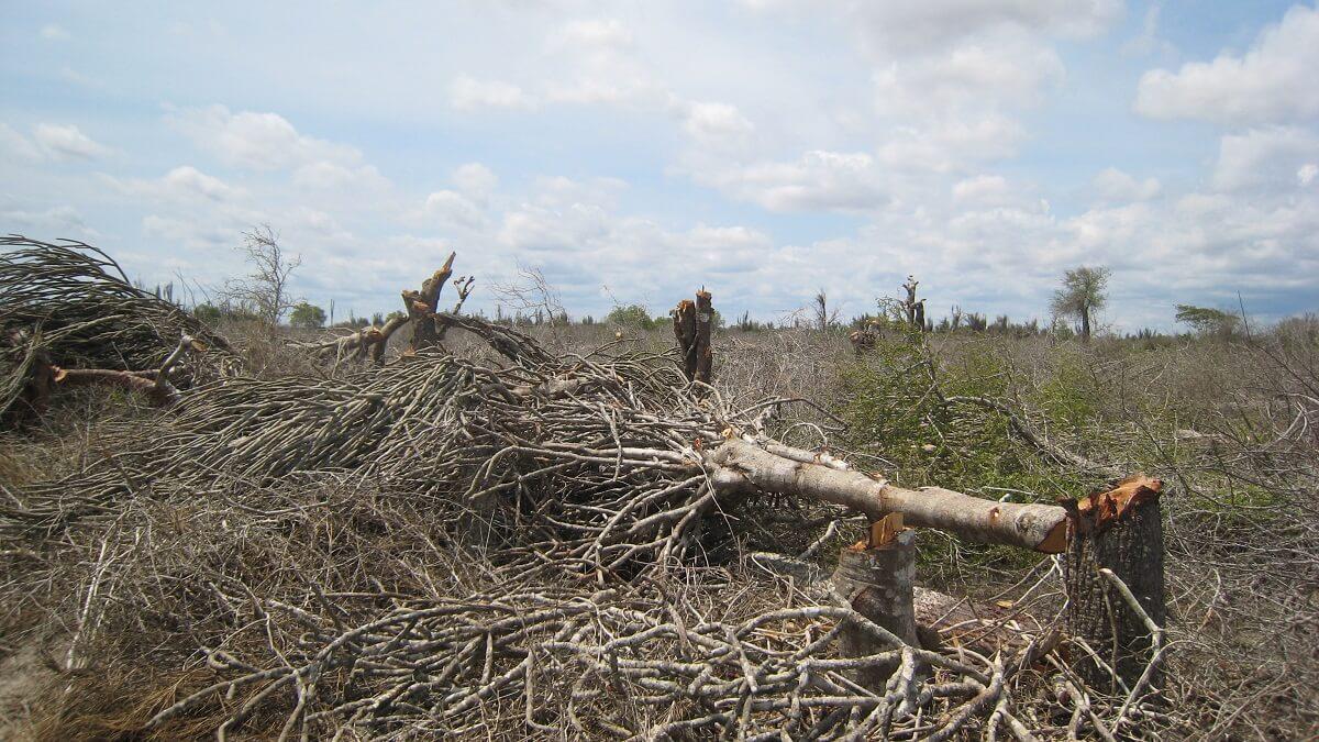 Nederland in top 5 Europese veroorzakers ontbossing