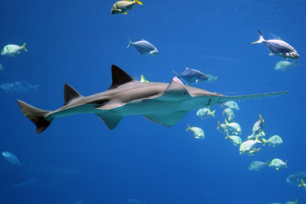 Mercabo Cove veilige thuishaven voor bedreigde soorten