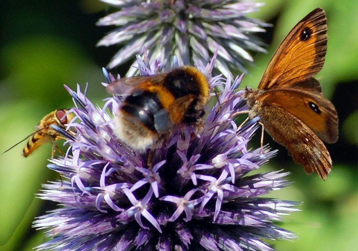 Het belang van biodiversiteit
