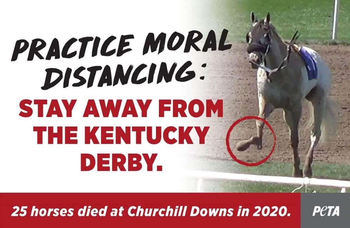 PETA: 'Hou moreel afstand van paardenraces'