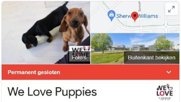 De aanhouder wint - We Love Puppies permanent gesloten