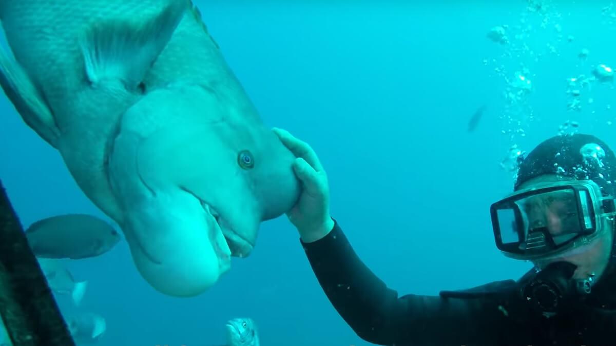 Japanse duiker en vis onafscheidelijk