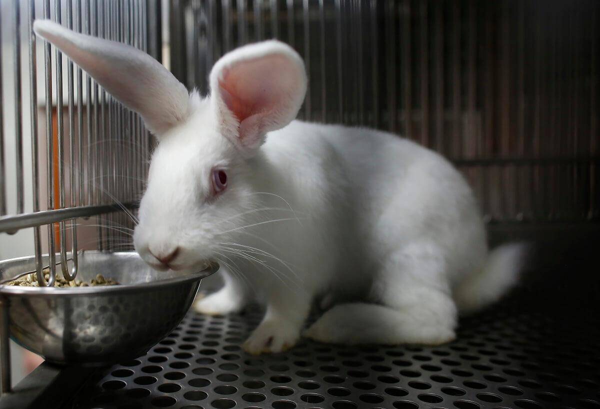 Hawaï gaat dierproeven voor cosmetica verbieden