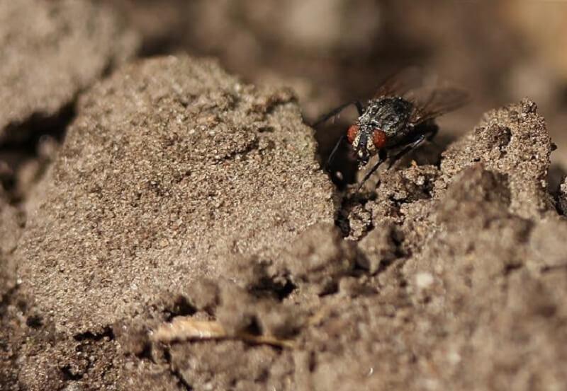 Essentiële bodemorganismen worden geschaad door pesticiden