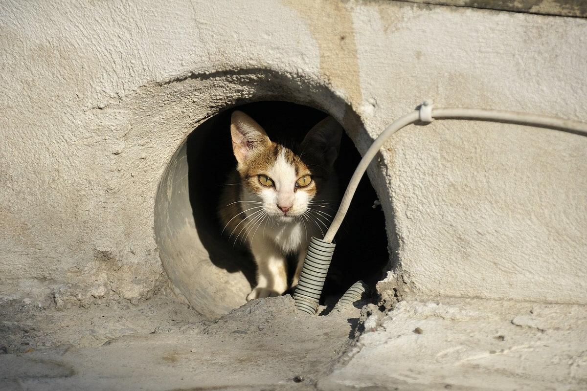 Sterilisatie-wet moet zwerfdierenprobleem Griekenland aanpakken