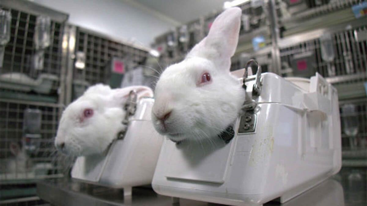 Controversieel proefdiercentrum in Spanje mag weer dierproeven uitvoeren | Foto: AnimaNaturalis