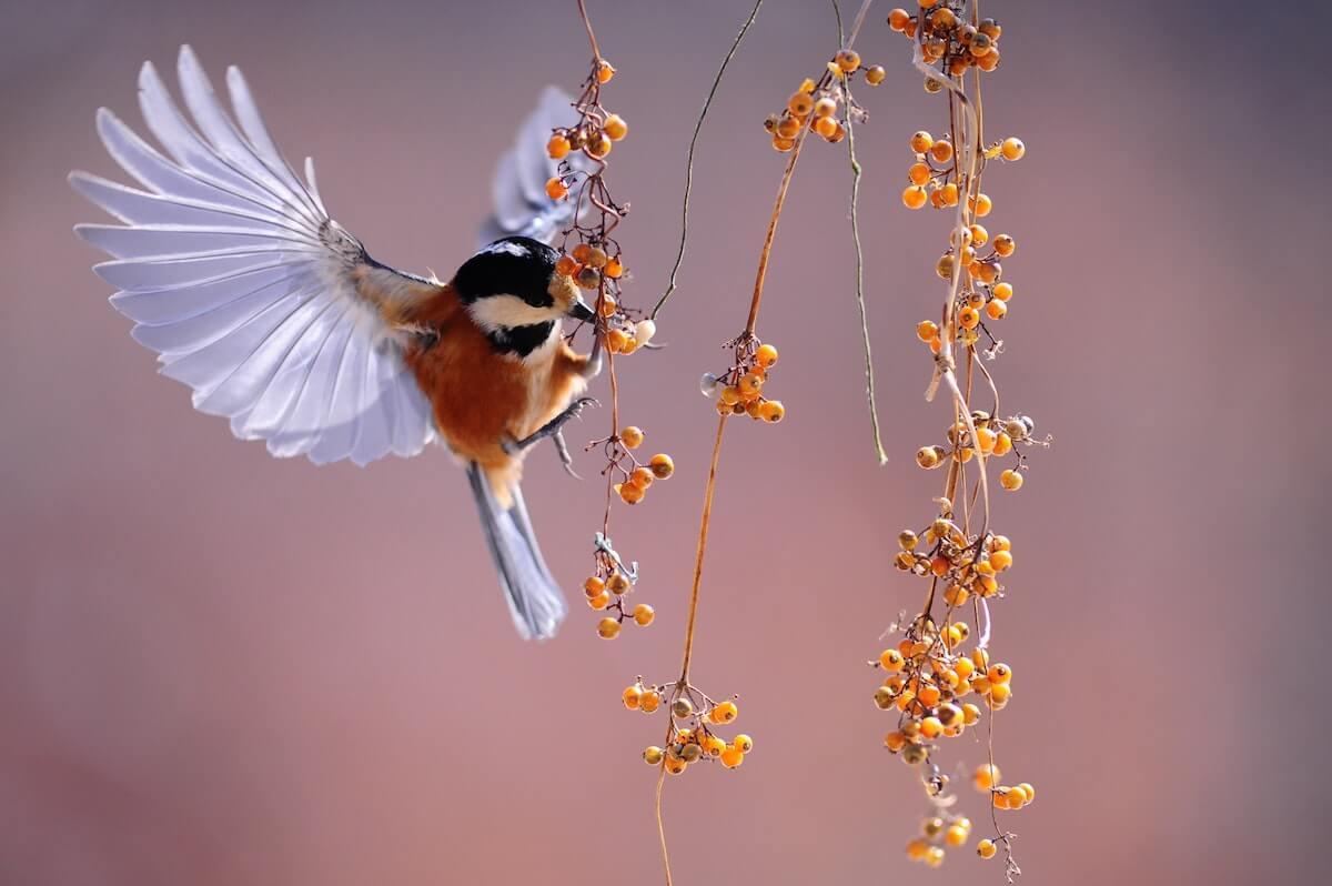 vogels nodig