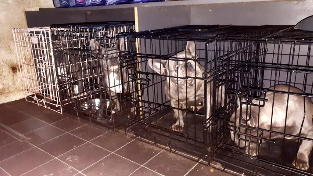 Illegale dierenhandel opgerold in Schagen en Medemblik