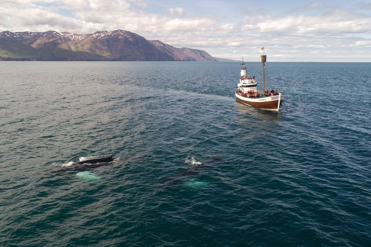 Toegenomen scheepvaart bedreigt walvissen