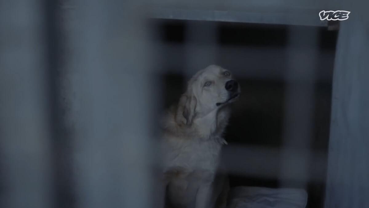 Koerdische dierenarts stelt baanbrekende dierenrechtenwet op