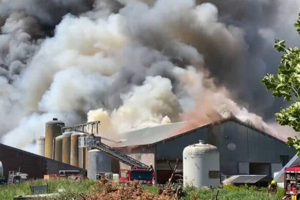 4600 varkens door door stalbrand in Nederweert
