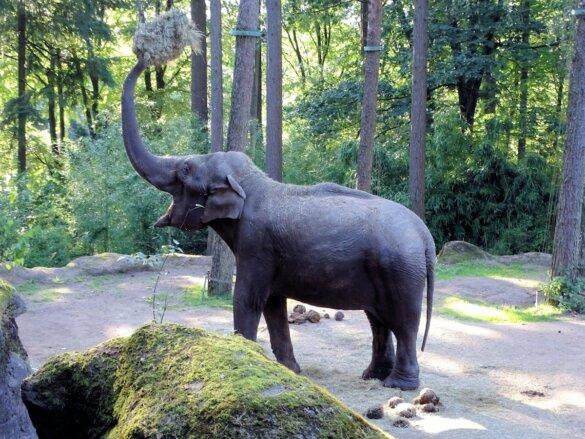 olifanten in dierentuinen