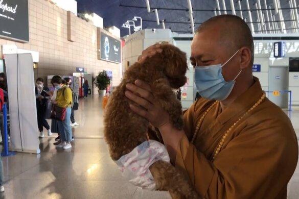 Chinese monnik redt straathonden in Shanghai