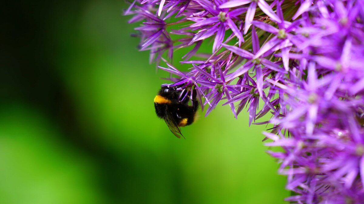 Ambitieus plan VN tegen verlies biodiversiteit