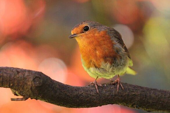 Frans hof verbiedt vogeljacht met lijmstokken