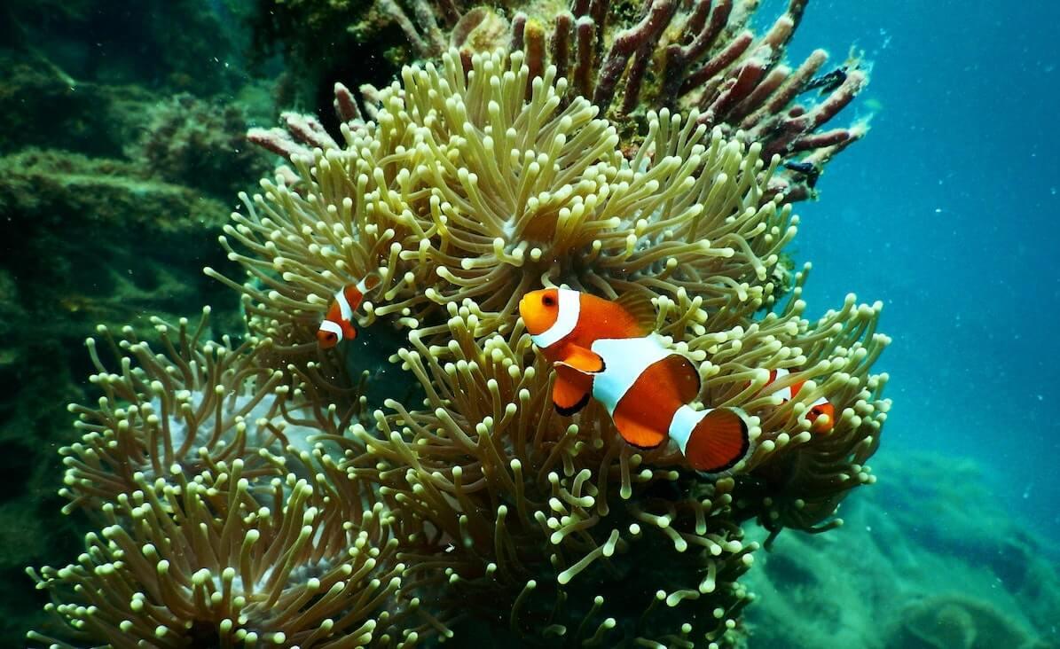 Australië snorkelt