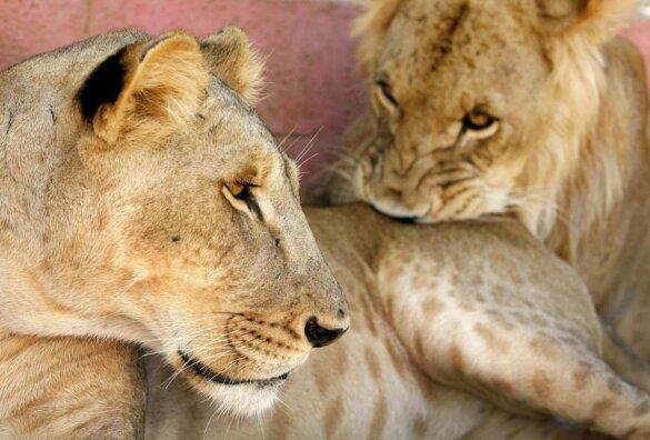 dierentuindieren Libanon