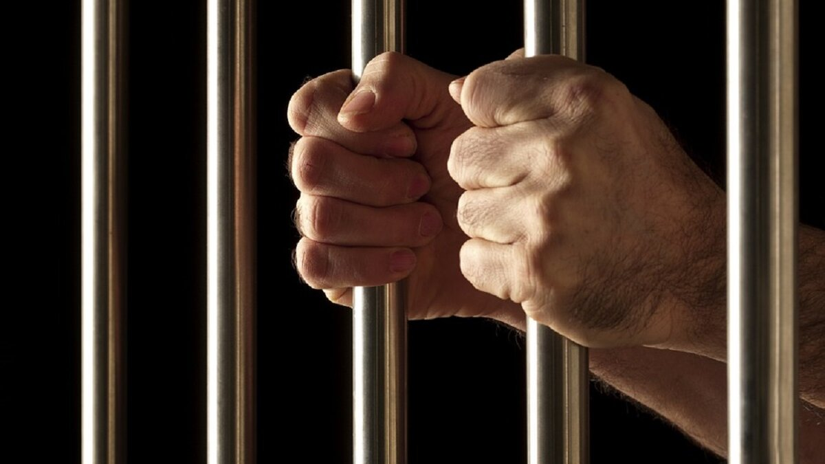 Vlaanderen verhoogt straffen voor dierenmishandeling