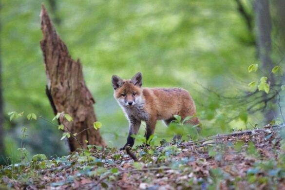 Beperking bejaagde diersoorten in Gelderland