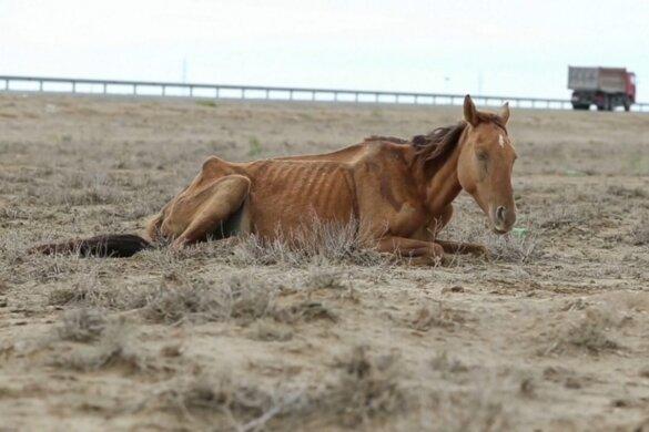 Dieren sterven in Kazachstan door extreme droogte