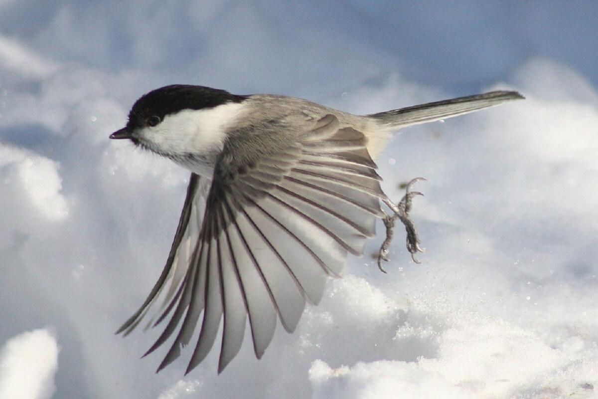 Vogels houden grote verandering klimaat moeilijk bij