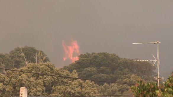 Zwijn in vlammen steekt hectaren Spaans bos in brand