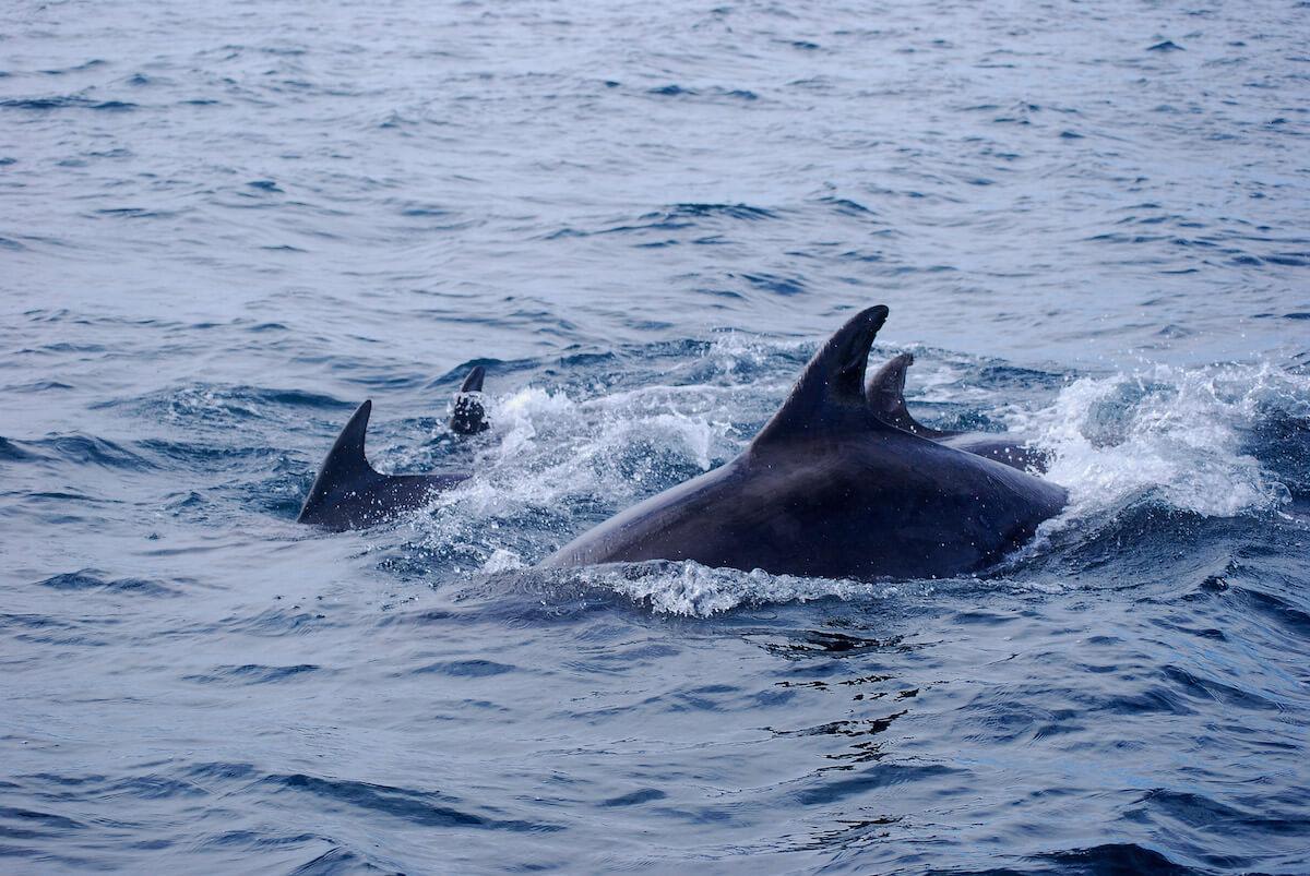 verstoringen dolfijnen