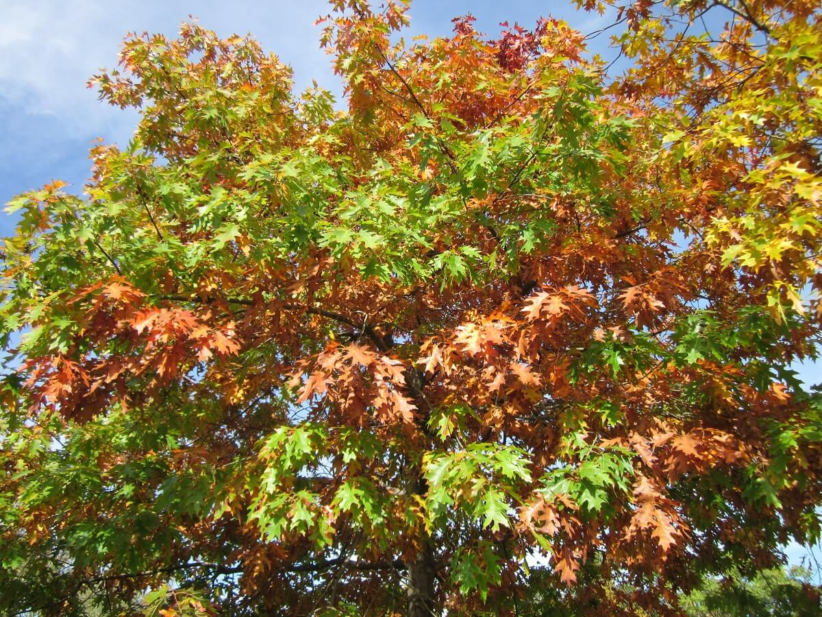 Een op drie boomsoorten met uitsterven bedreigd