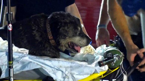 Dove hond Zoey gered uit riool