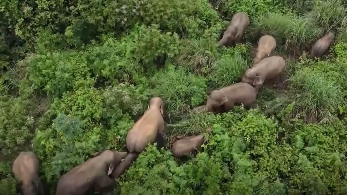 food court voedselveld olifanten China