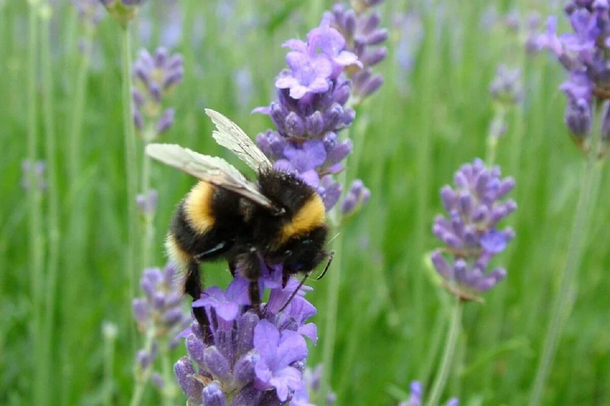 Franse NGO's dreigen staat met rechtszaak om toestaan pesticiden