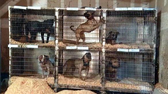 hondenvechtnetwerk