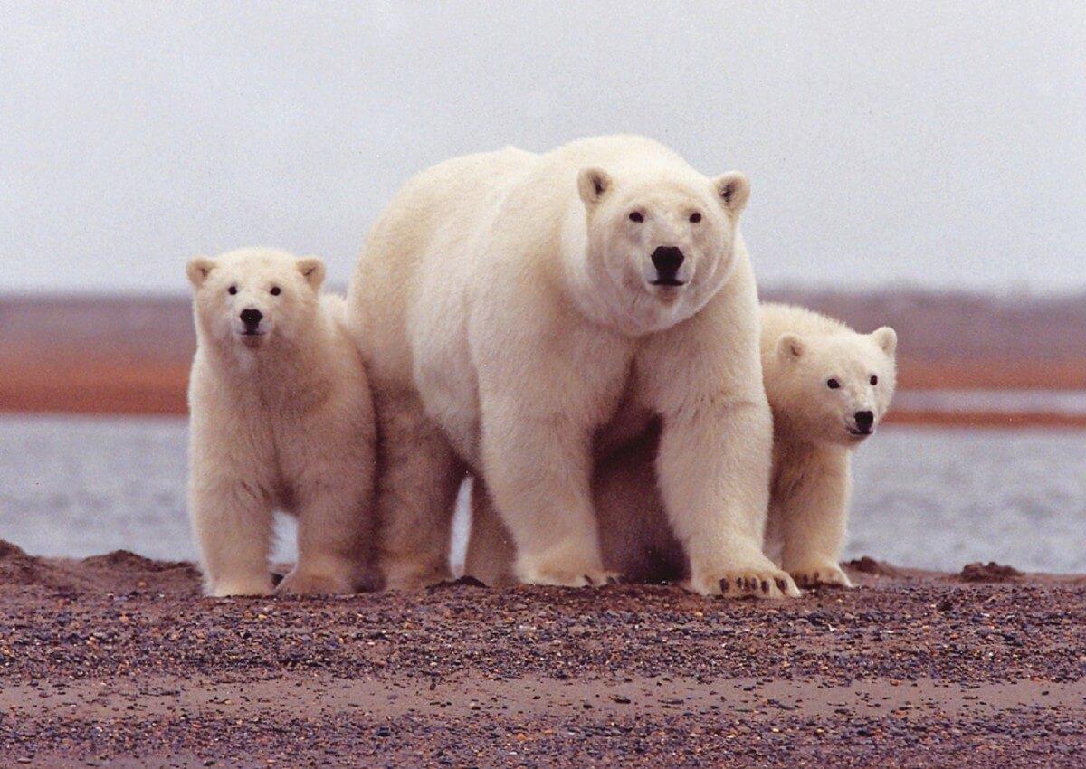 streep door groot olie- en gasproject Noordpool
