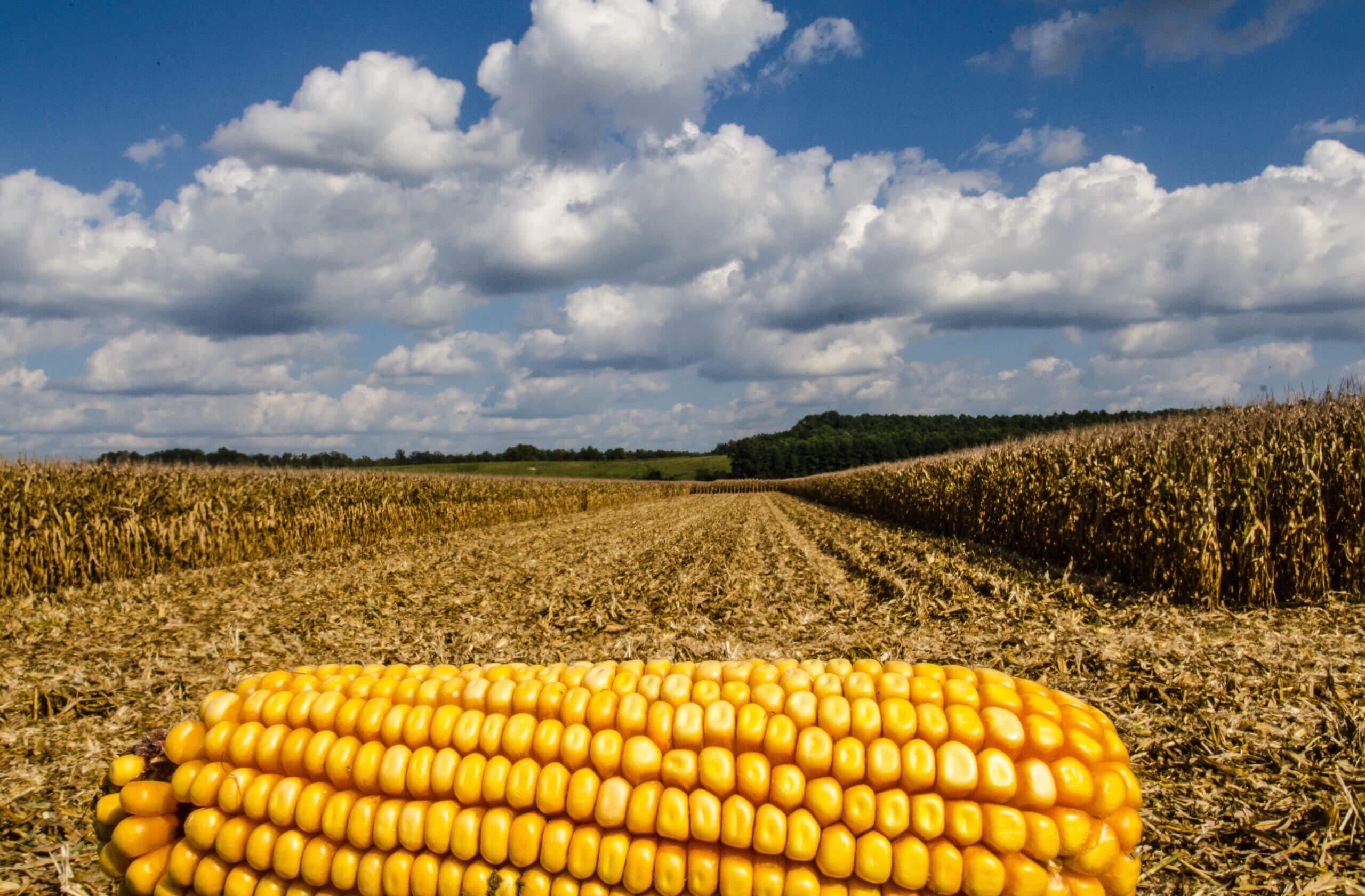 90 procent landbouwsubsidies schaadt mens en planeet