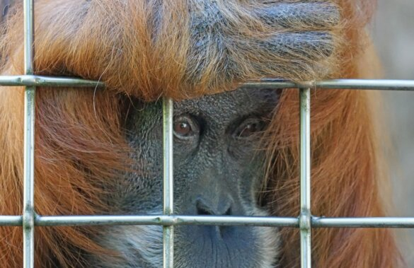 Illegale handel in wilde dieren wordt in Hongkong voortaan bestraft als georganiseerde misdaad